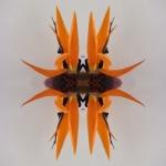 Starting point - Orange Camera shoot