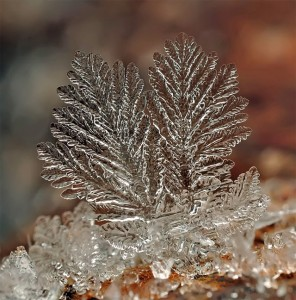 source: http://www.thisiscolossal.com/2012/12/remarkable-macro-photographs-of-ice-structures-and-snowflakes/