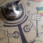 Cat in Cardboard