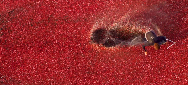 cranberry-4