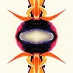 Experimental work created using Be Funky, OrangeCam and MegaPhoto