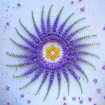 danmala-flower-mandala-kathy-klein-28